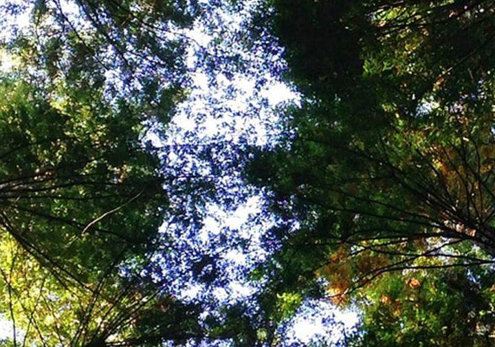 5 formas de disminuir el impacto ecológico de tu empresa y cómo comunicarlo